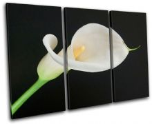 Calla Lily Flowers Floral - 13-1490(00B)-TR32-LO